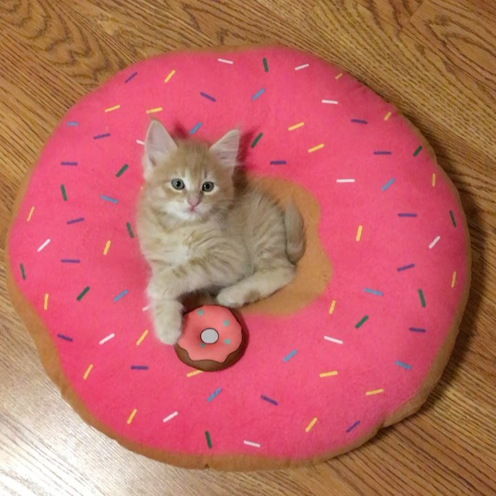 Chat lit beignet