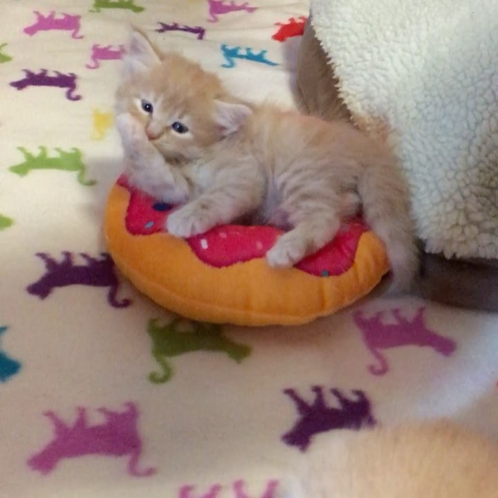 chat dort beignet
