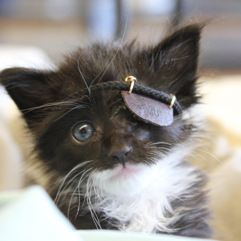 chat cache oeil