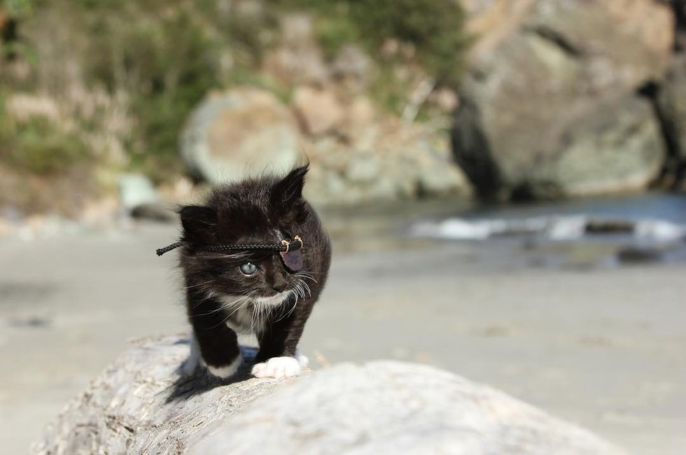 chat cache oeil plage