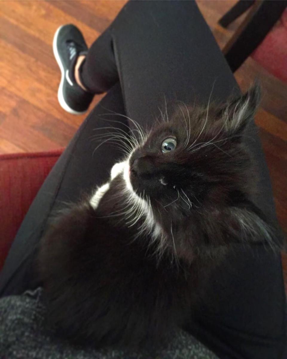 chaton oeil infecté