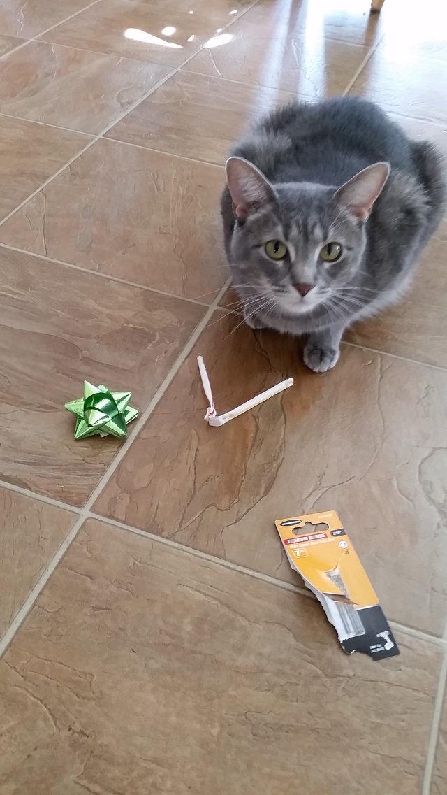 chat escaliers cadeau