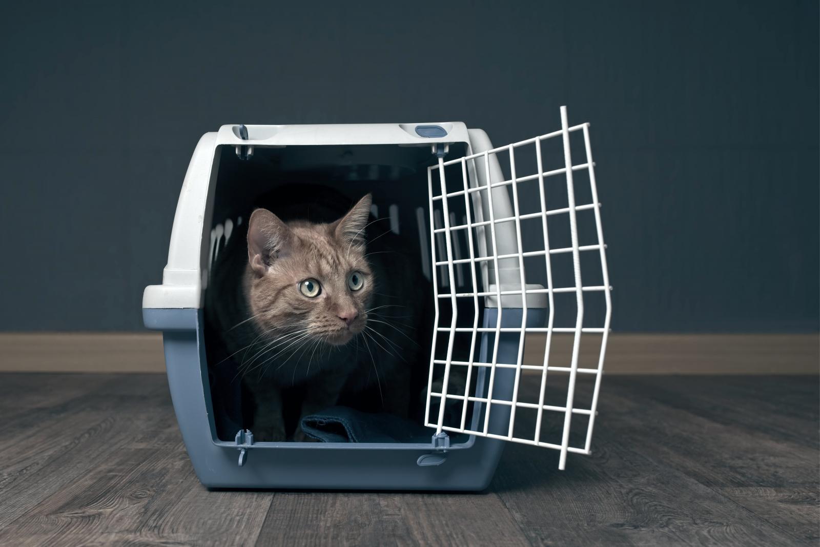 chat boite de transport