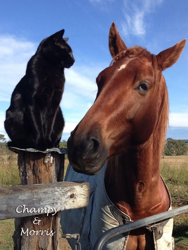 chat cheval