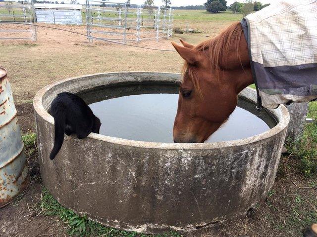 chat cheval eau
