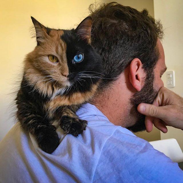 chat deux visages