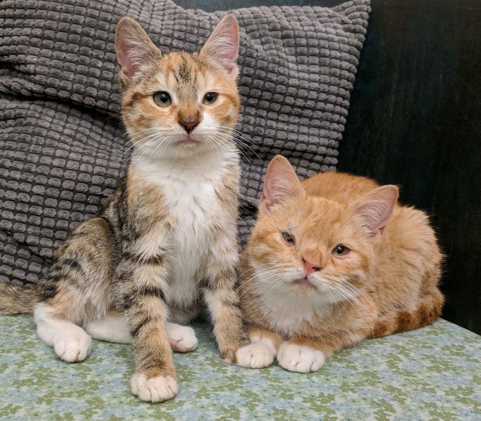 chatons problème chromosomes
