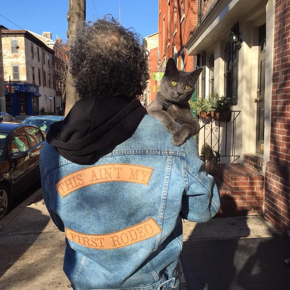 chaton sur épaules