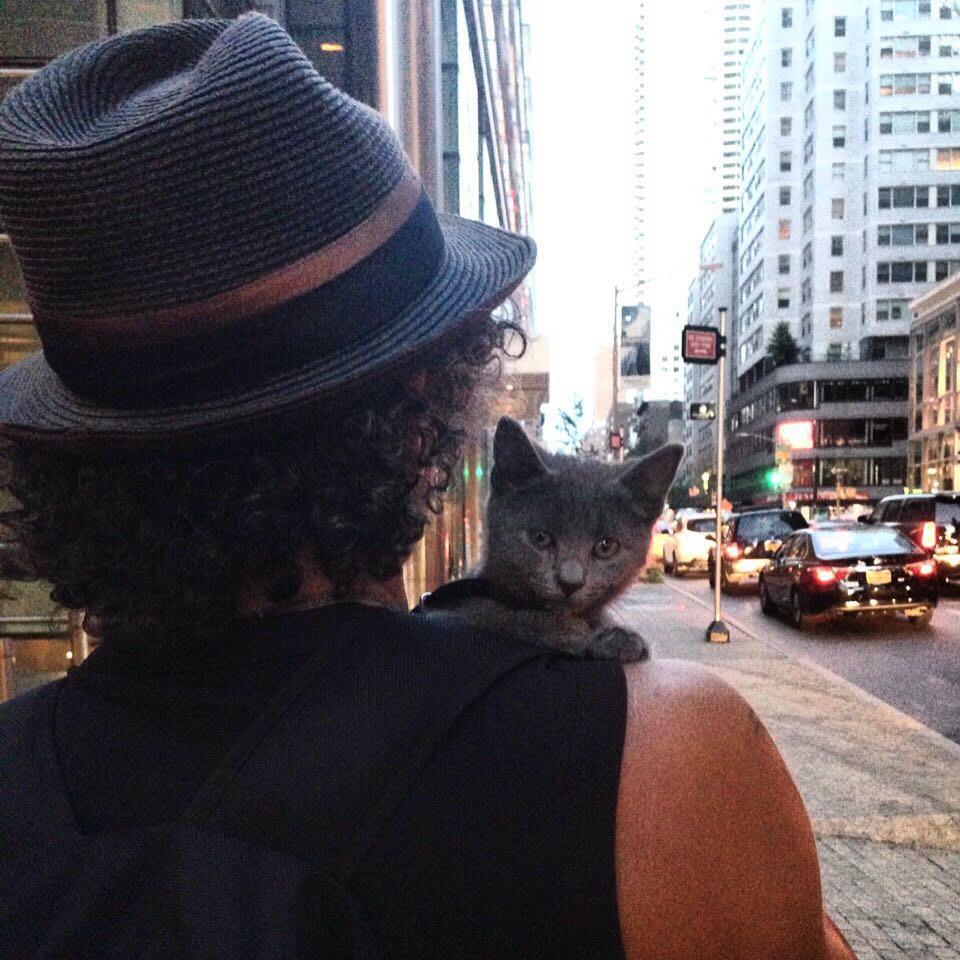 chaton épaules