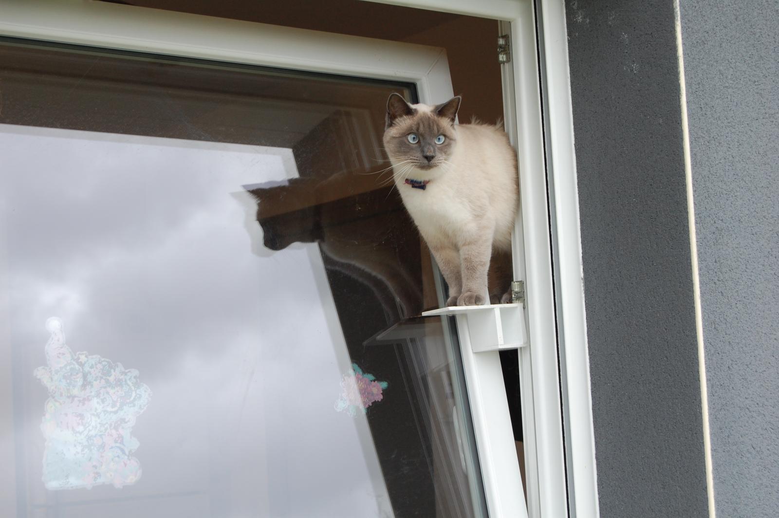 chat passerelle fenetre