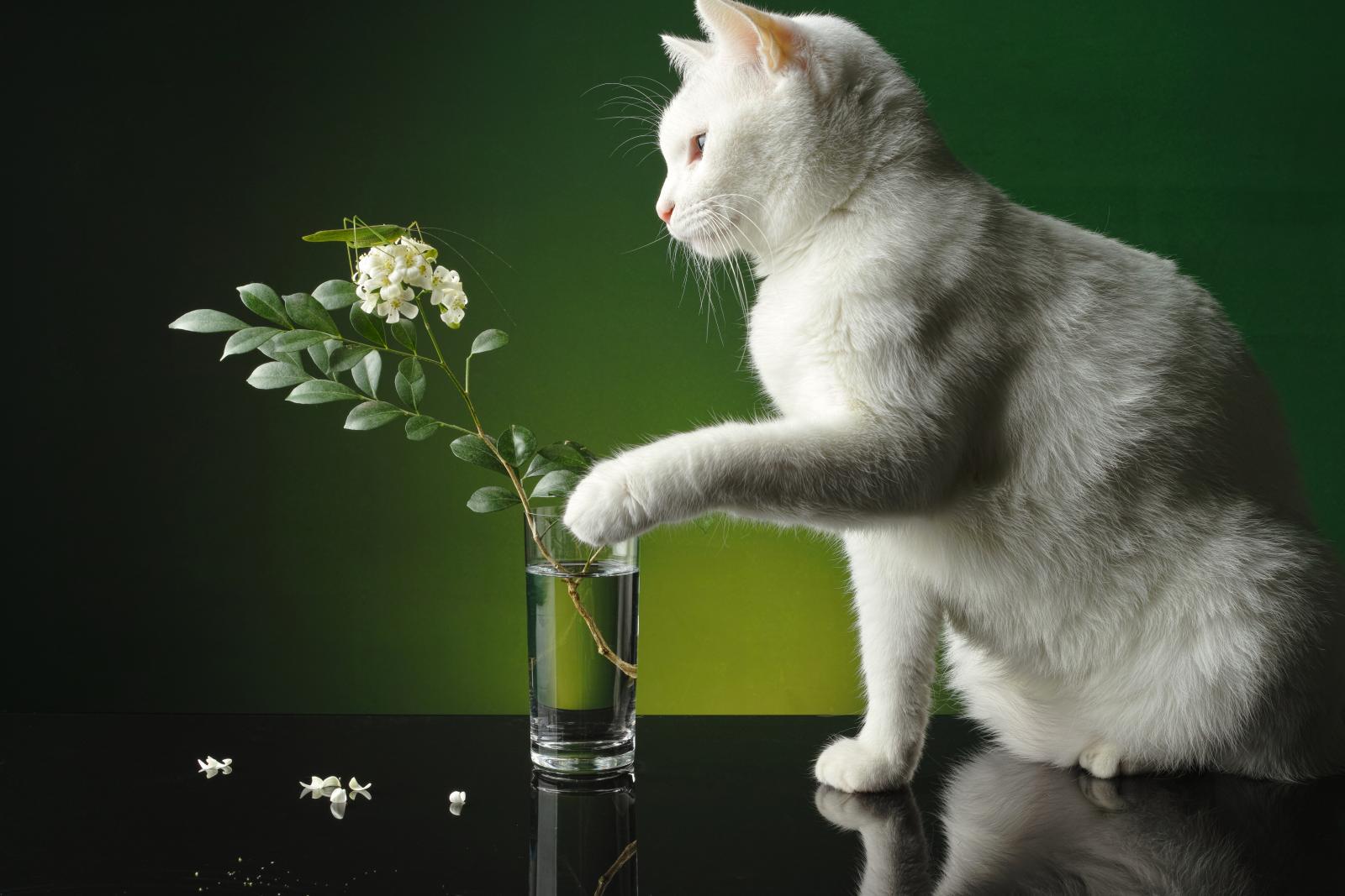 chat vase