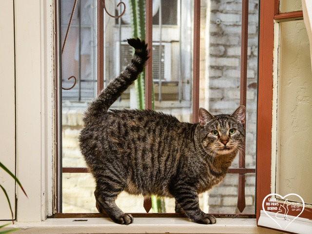 beau chat gale soignée