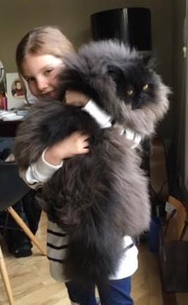 chaton devenu immense