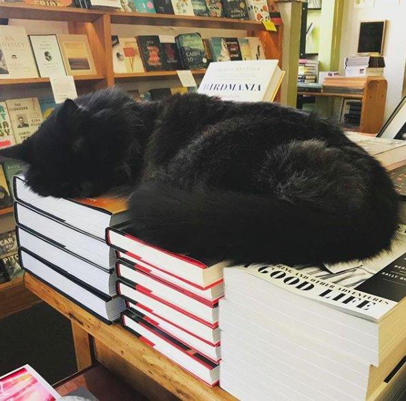 chat librairie