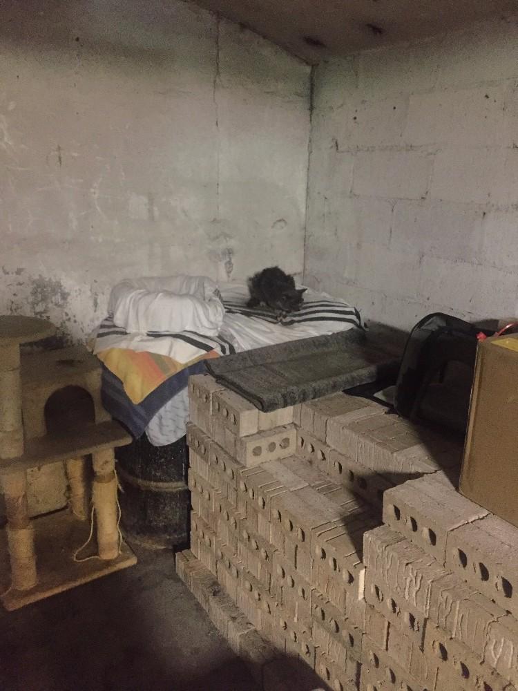 chat abandonné maison