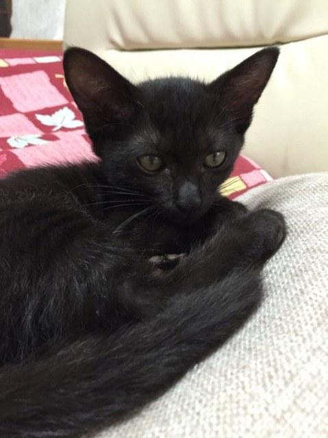 chat moins maigre noir