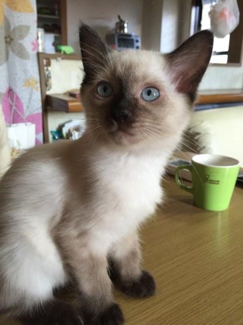 chat blanc maigre