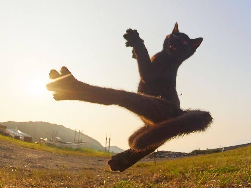 chat ninja pirouette