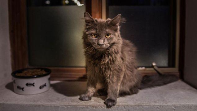 chatte métamorphosée