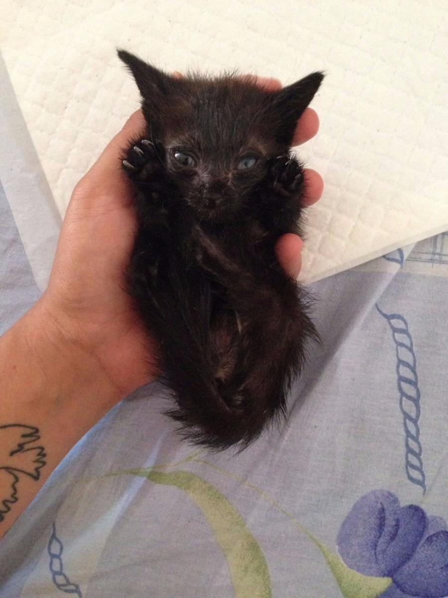 chaton noir abandonné