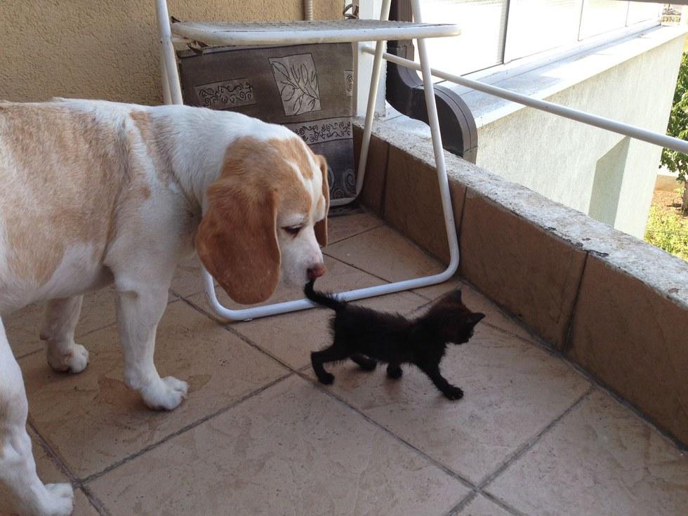 chaton chien amis