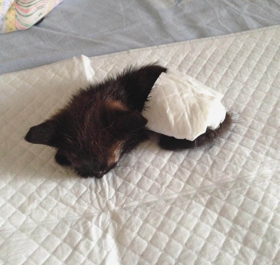 chaton couche