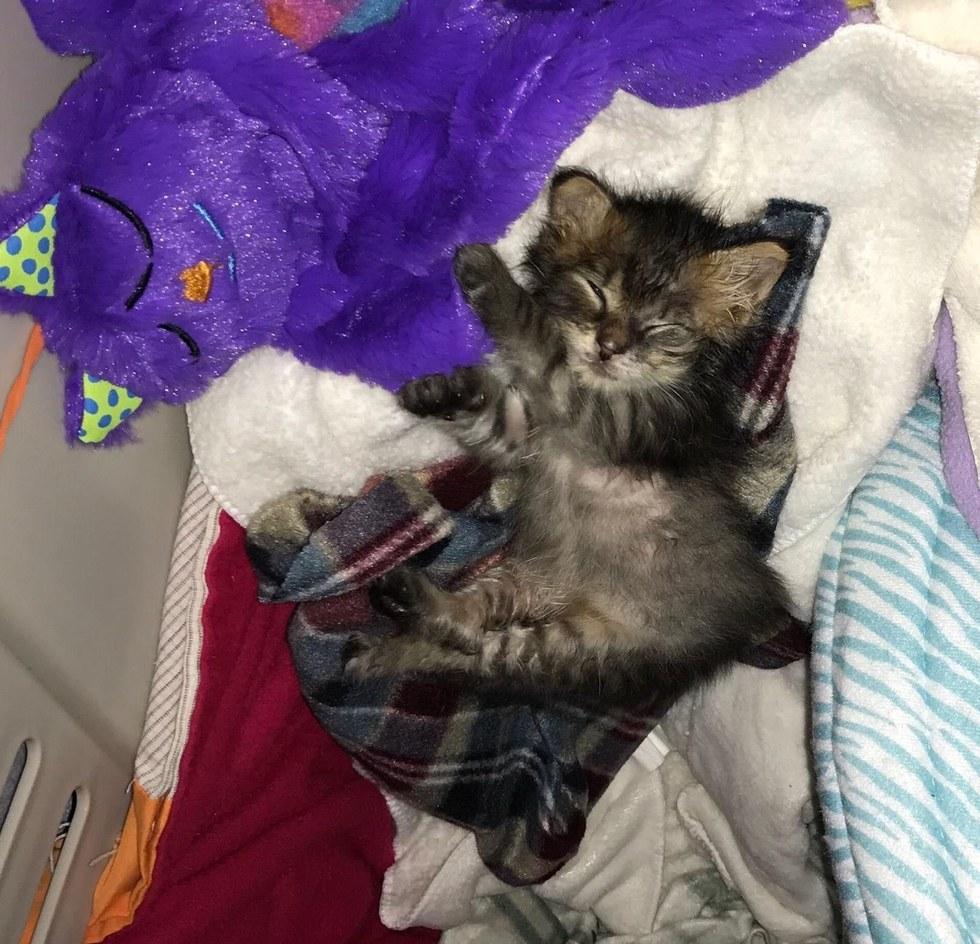 chat oeil abimé dort