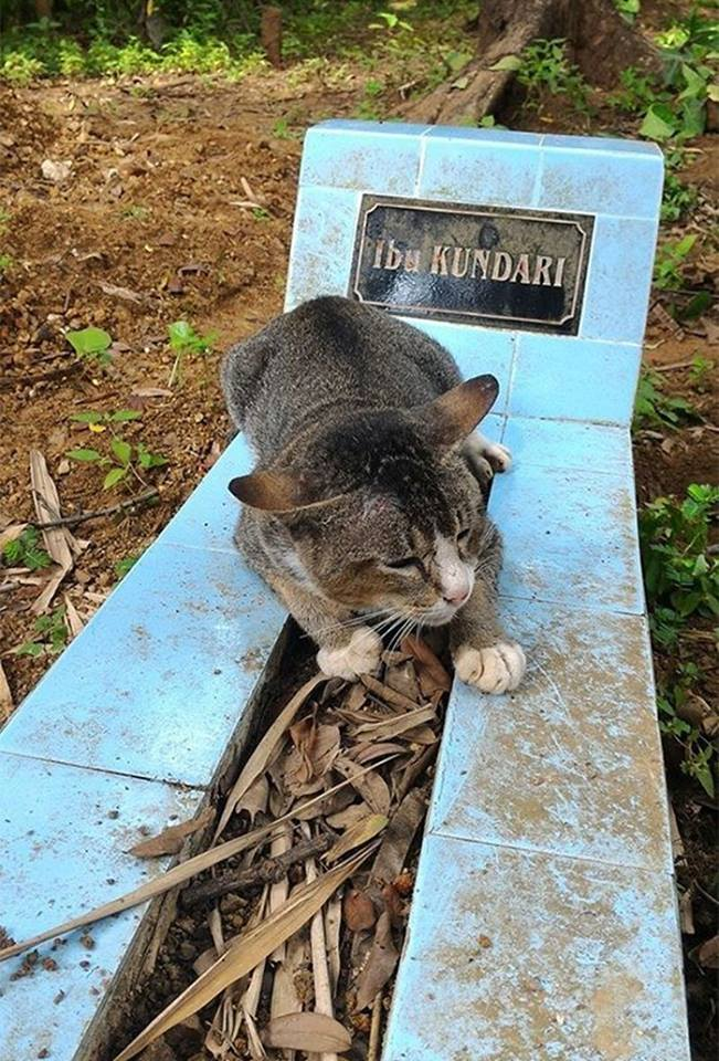 chat tombe maitre