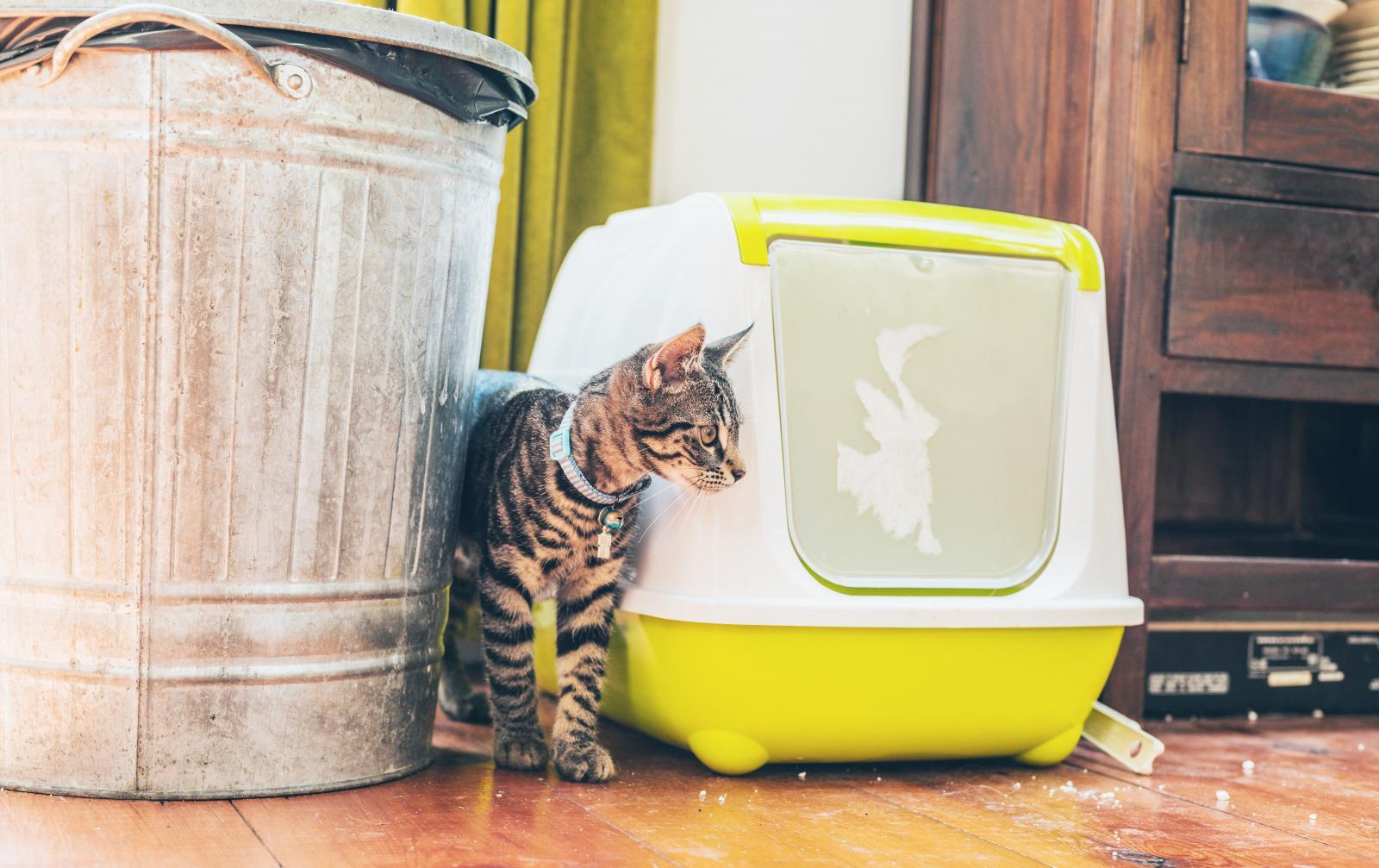 chat qui fait pipi en dehors litière