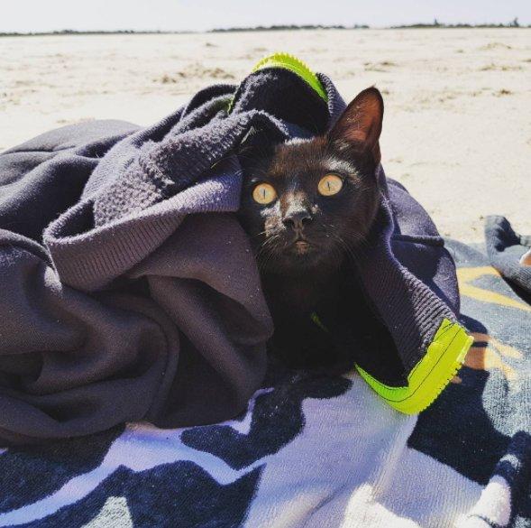 chat plage serviette mer