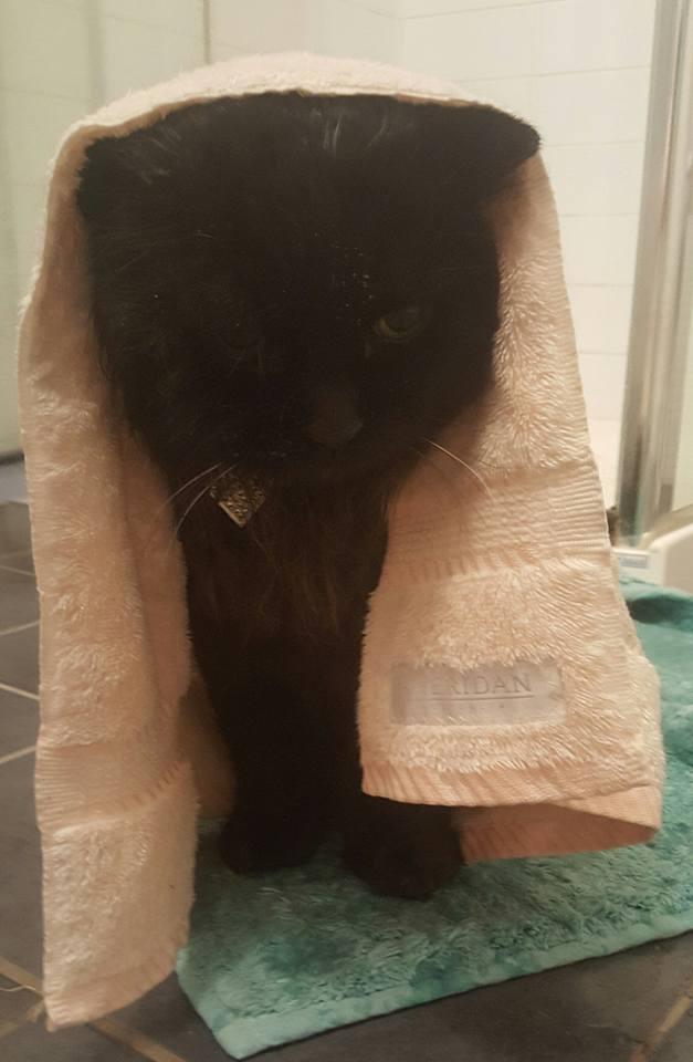 chat prend douche