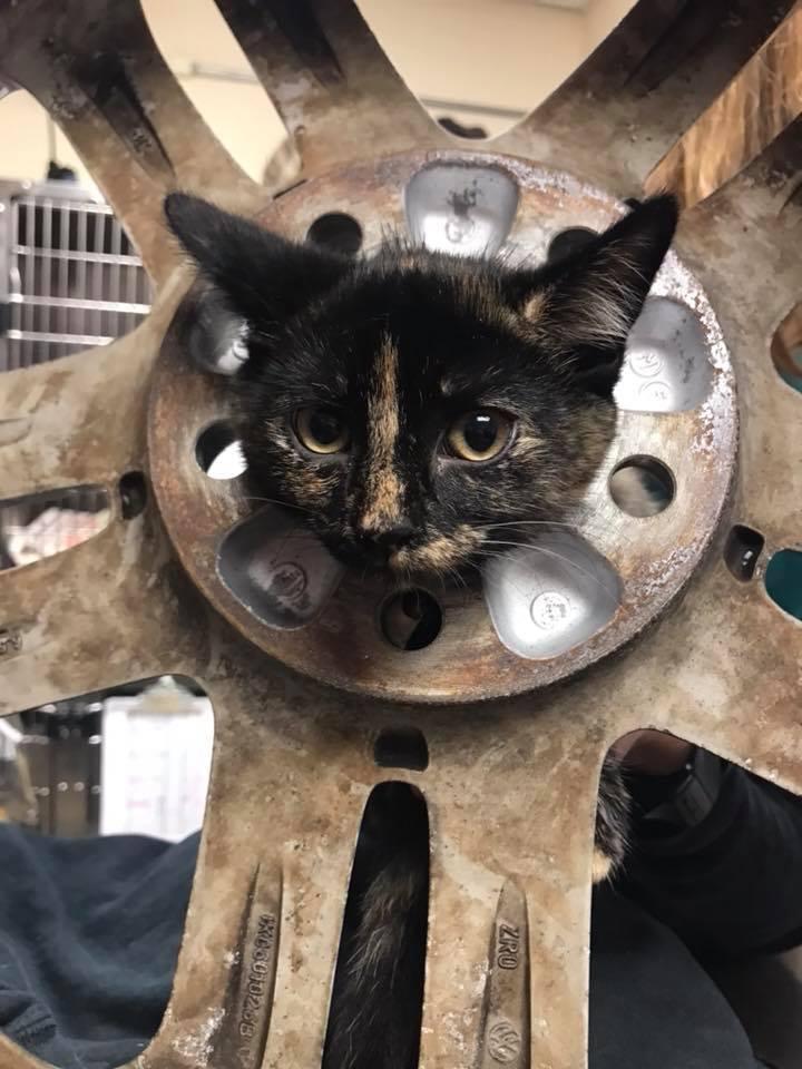 chaton coincé pneu