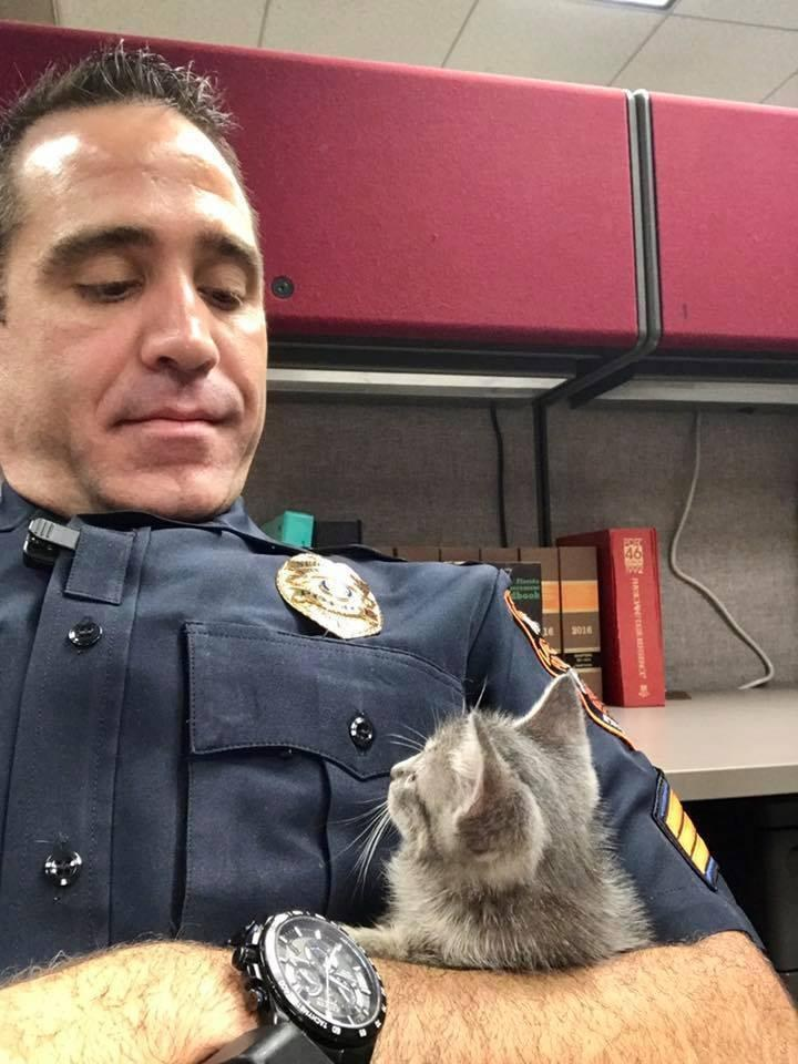 Un policier fait le plus beau des cadeaux à un chaton errant