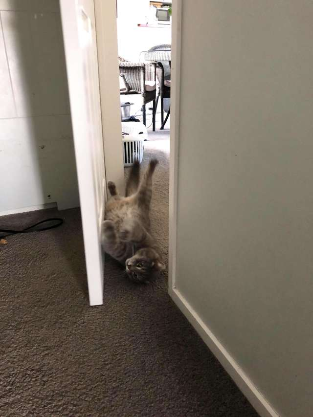 chat porte fermée technique