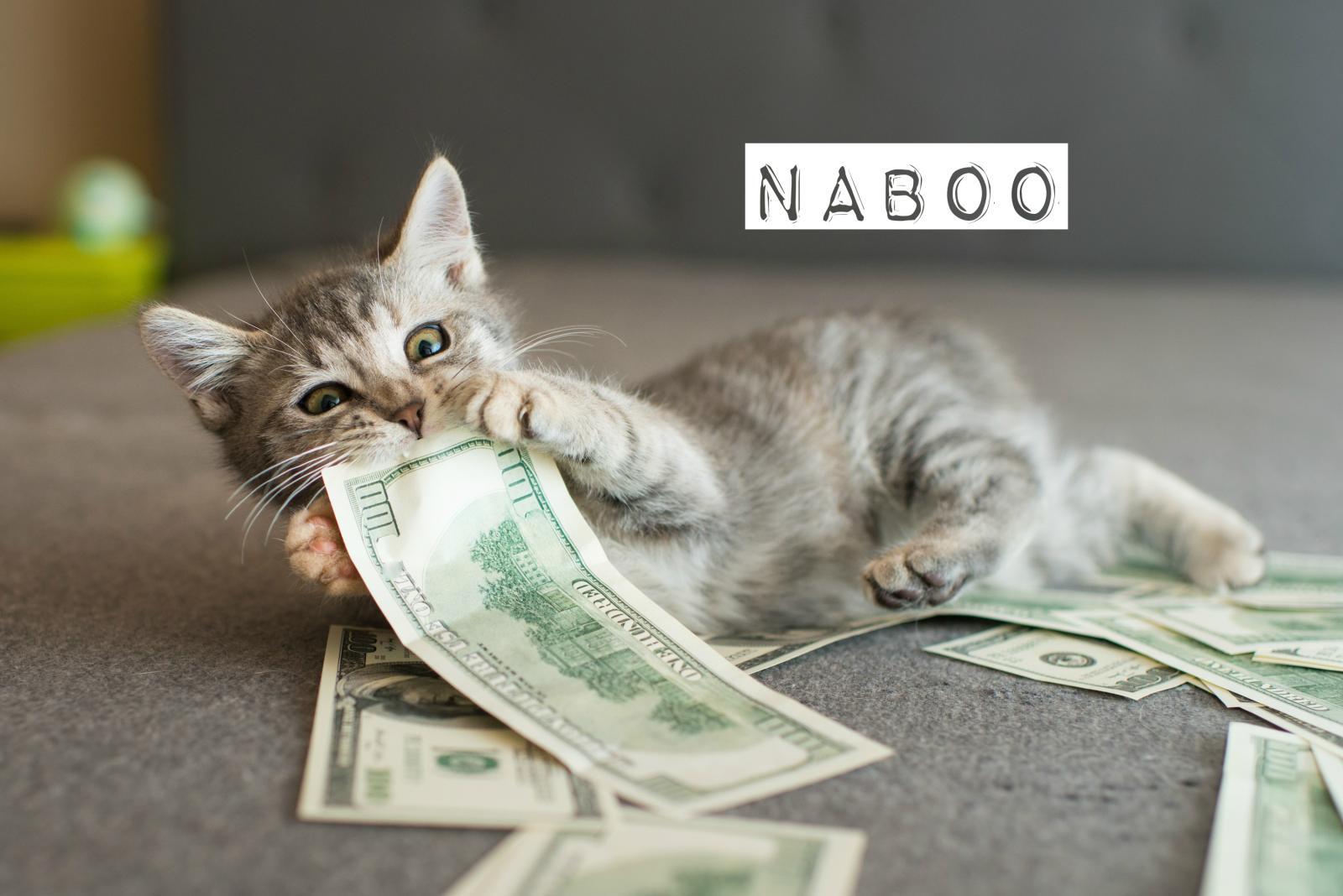 prénom N chat 2017
