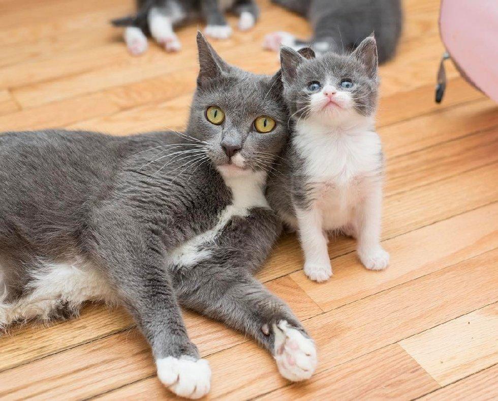 chatons soeurs