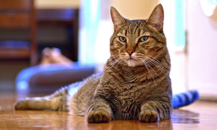 il fait semblant de mourir pour voir la r action de son chat et n en revient pas vid o. Black Bedroom Furniture Sets. Home Design Ideas