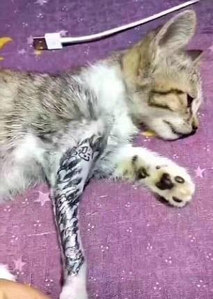 chat patte tatouage
