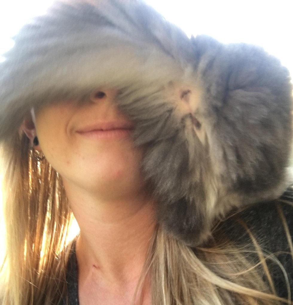 chaton tête malade