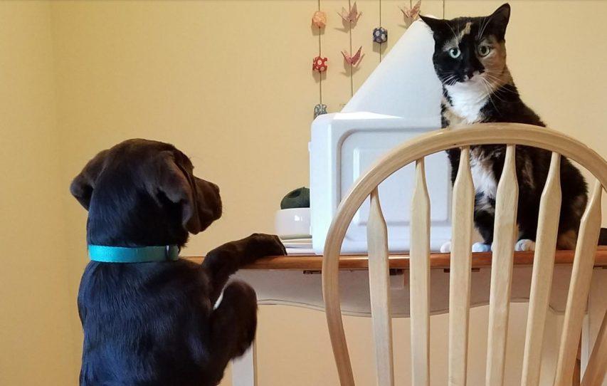 Ce chat a une réaction bouleversante après la mort du chien de la famille