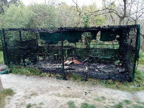 chat village angers incendie