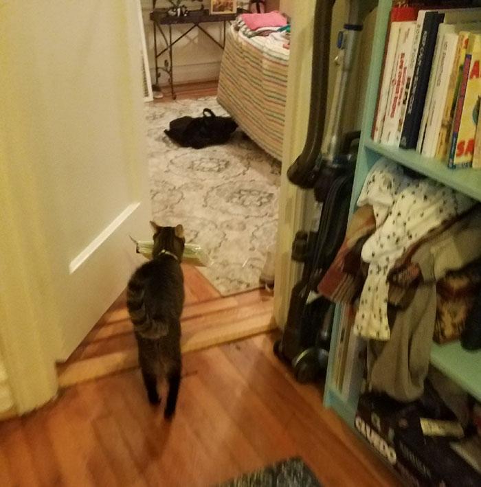 chat voleur pailles