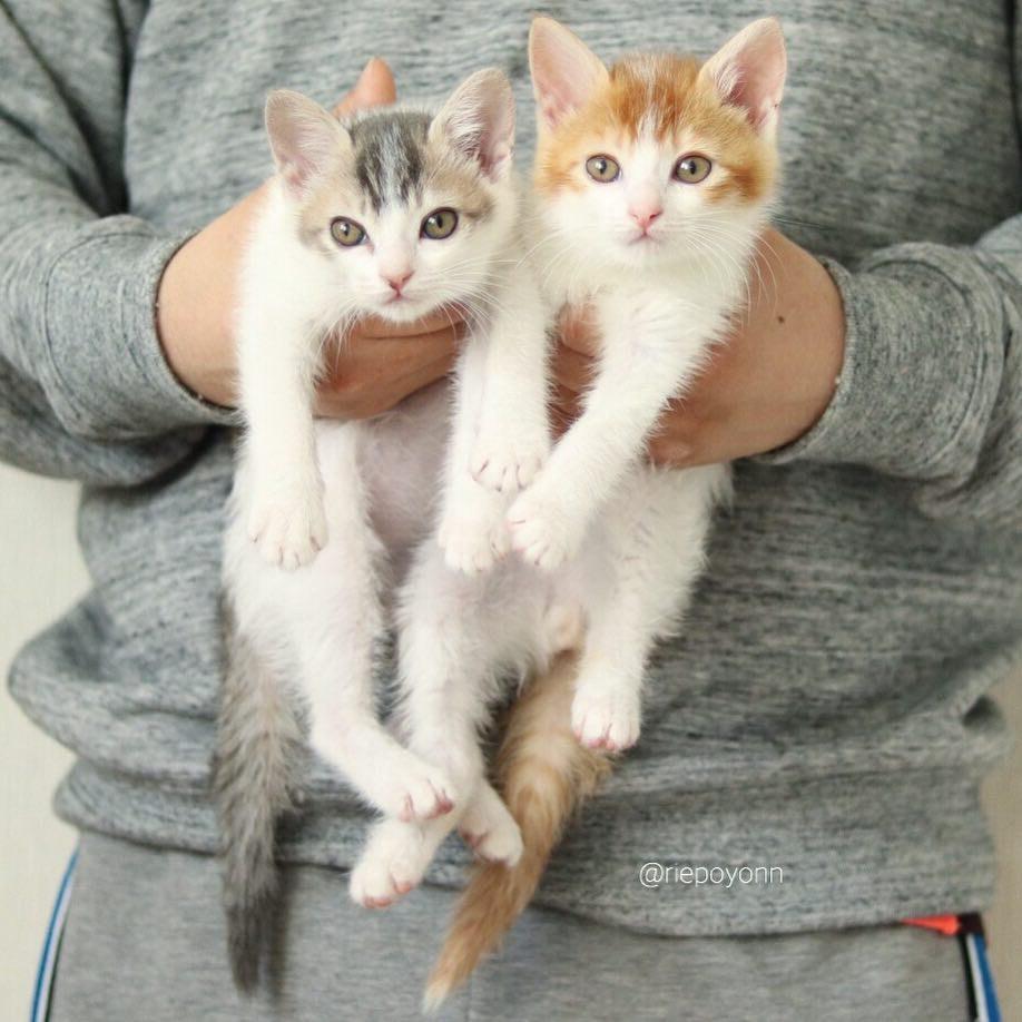 ils sauvent deux chatons et leur offrent un lit ikea le r sultat est trop mignon sauvetage. Black Bedroom Furniture Sets. Home Design Ideas
