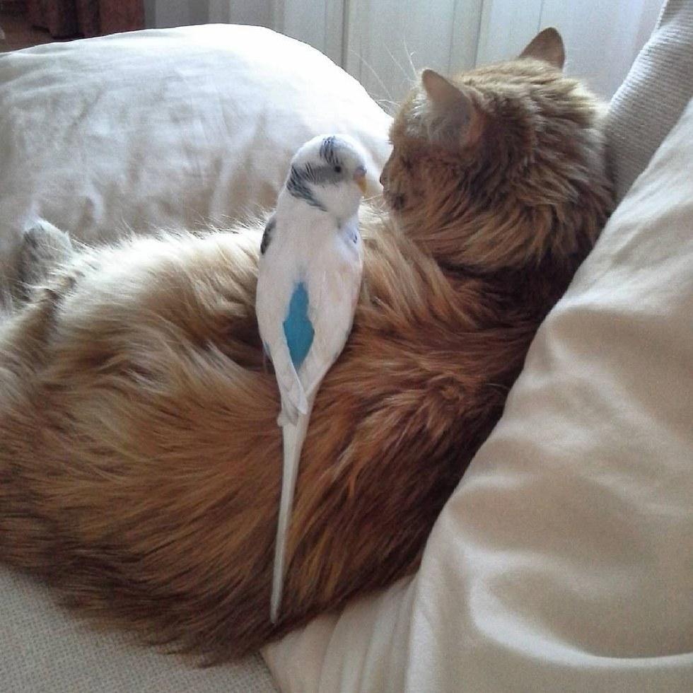 chat et oiseau amis