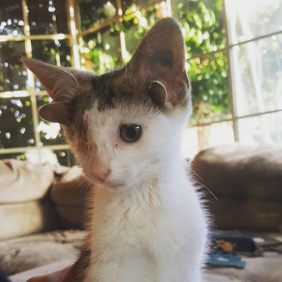 chaton un oeil