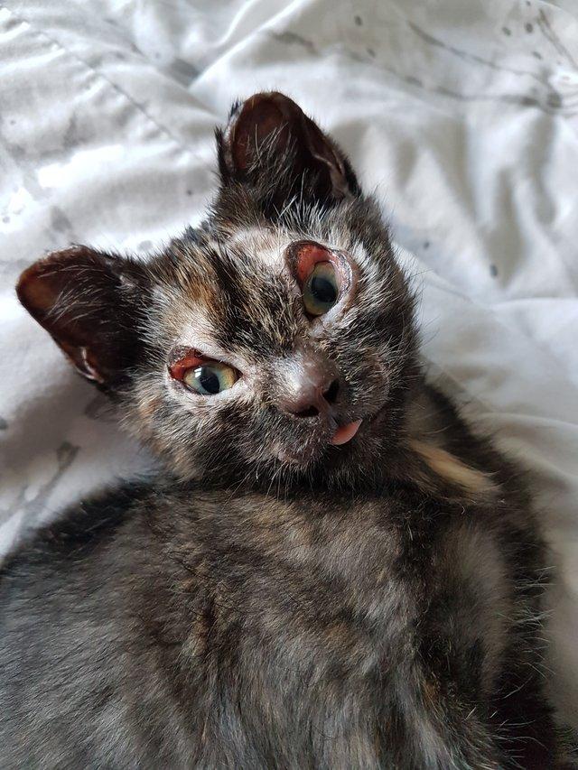 chat brulé yeux