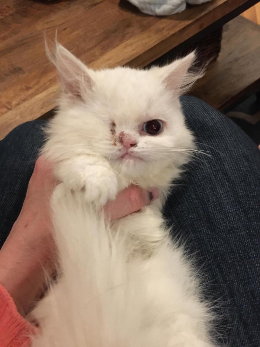 chaton caire un oeil