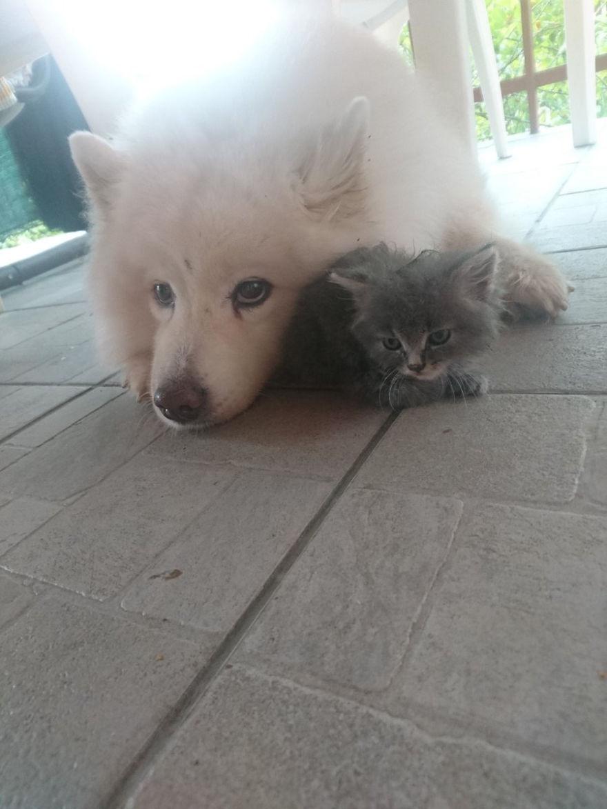 chaton calin chien