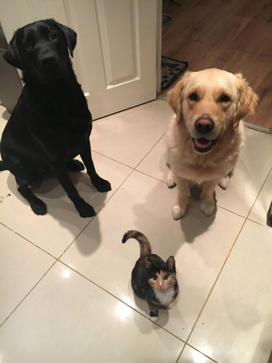 chiens garde du corps chat