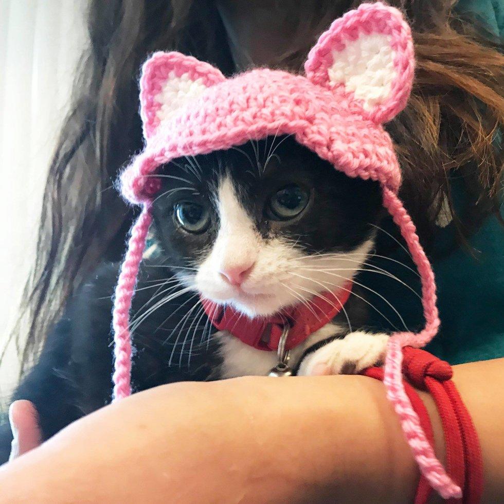 chaton fausses oreilles